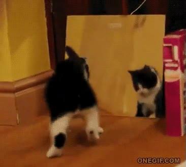 Enlace a La locura del espejo felino