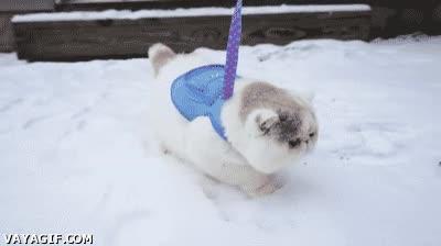 Enlace a Un gatito por primera vez en la nieve