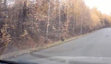 Enlace a Canguros en los bosques rusos, esto no puede ser normal