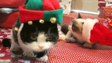 Enlace a Está claro que a Grumpy y su hermano no le mola nada la navidad