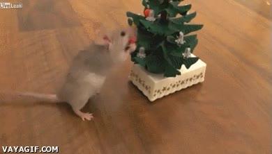 Enlace a ¡Ya está aquí la Navidad, incluso para los roedores!