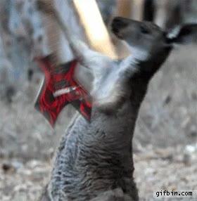 Enlace a El canguro que realmente vivía el rock