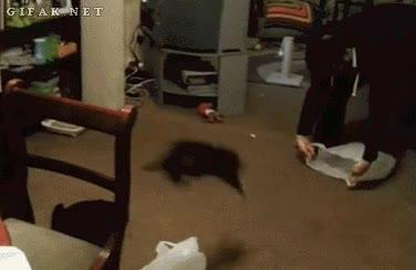 Enlace a Cómo transportar a un gato