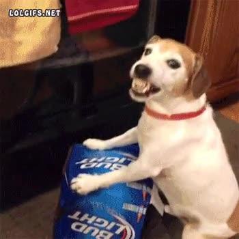 Enlace a No se te ocurra tocar mi preciada cerveza