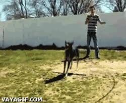 Enlace a El perro saltando a la comba