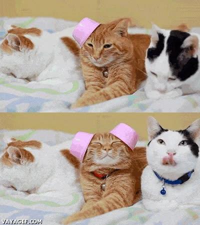 Enlace a Para los que dicen que los gatos no son dóciles