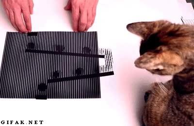 Enlace a Ilusiones ópticas tan reales que engañan hasta a los gatos