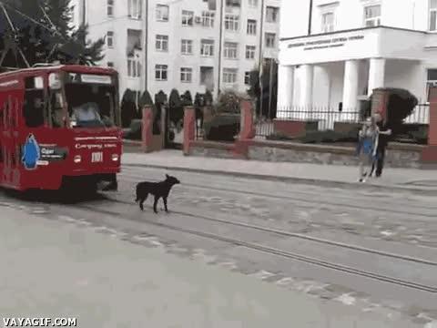 Enlace a No sé si es que este perro está confundido o es increíblemente troll