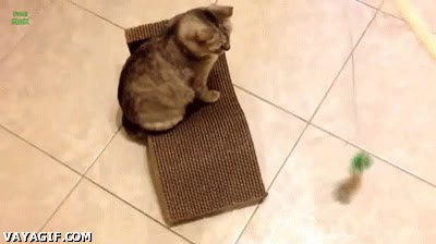 Enlace a Es tan fácil trollear a mi gatito...