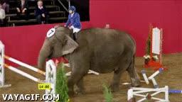Enlace a ¿Que quieres que salte las vayas? Por favor, soy un elefante...