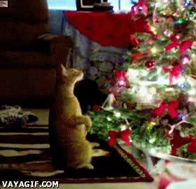 Enlace a Éxtasis navideño felino