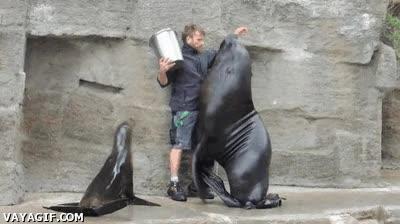 Enlace a Bien humano, hablemos claro de una vez, vas a darme el maldito cubo de sardinas sólo a mí, ¿estamos?