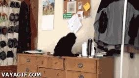 Enlace a ¡Hola humano! ¿Has visto al perro que ha hecho esto?
