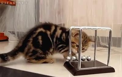 Enlace a Los gatos ya no se conforman con ser adorables, ahora también se interesan por la ciencia