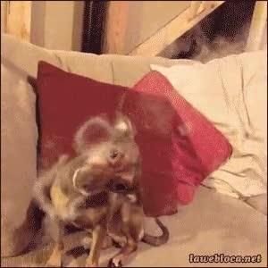 Enlace a Creo que no le gustan demasiado los aros de humo
