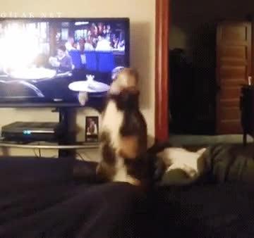 Enlace a Gatos y su comportamiento difícilmente explicable