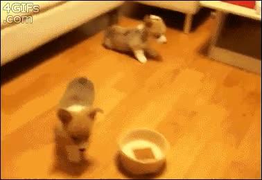 Enlace a ¡Hora de la comida!