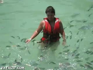 Enlace a ¡Oh, mira qué bonitos son estos peces! ¡Sorpresa!