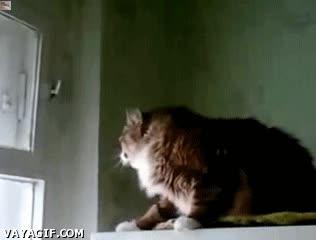 Enlace a Una ventana no es un obstáculo para este gato, dos tampoco