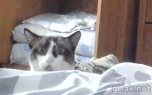 Enlace a Un vecino pidió que cuide a su perro porque iba a estar unos días fuera, al gato no le hizo gracia
