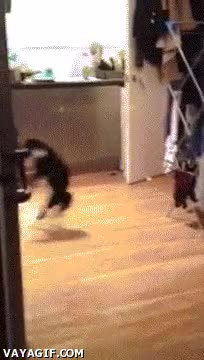 Enlace a A la mierda con ser gato, desde ahora soy un canguro