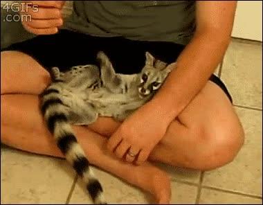 Enlace a ¡Tú mano me tiene harto, déjame dormir!