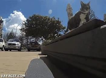 Enlace a ¿Cómo consiguieron enseñar a este gato a hacer skate?