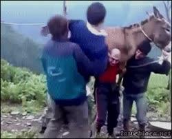 Enlace a En Rusia, los hombres cargan al burro que te carga a ti