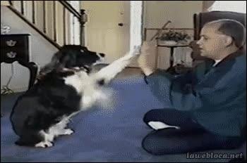 Enlace a Ojalá mi perro jugara así conmigo