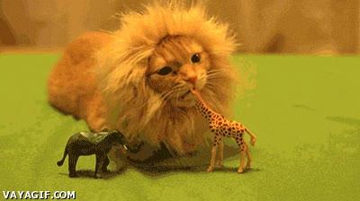Enlace a ¡Soy el rey de la selva!