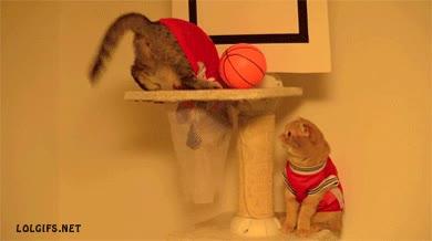 Enlace a A ver si lo he entendido, ¿la pelota tiene que entrar y yo también o qué?