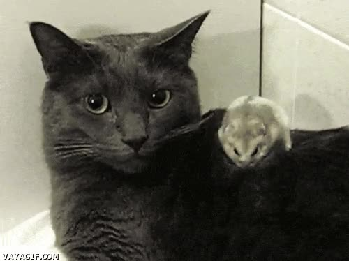 Enlace a ¿Un ratón? No, qué va, es mi fisioterapeuta personal