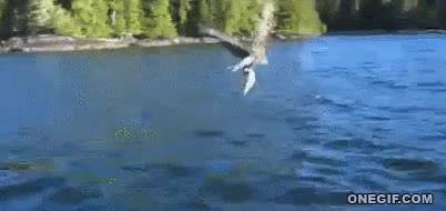 Enlace a Me llevo este pez, ¡gracias!