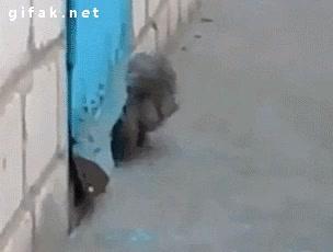 Enlace a El gato al rescate del perrito
