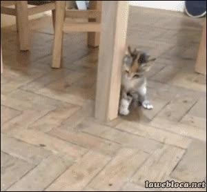 Enlace a Un gato no necesita más que una mosca para volverse completamente loco