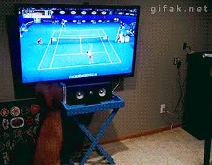 Enlace a Es difícil pasártelo mejor que este perro viendo el tenis