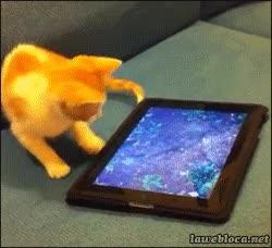 Enlace a ¿Pero por qué no puedo tocar el pez?