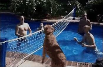 Enlace a ¡Yo también juego!
