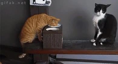 Enlace a ¡Ésta es mi comida! ¡No,es mía!