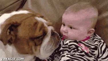 Enlace a El perro que adoraba a los bebés