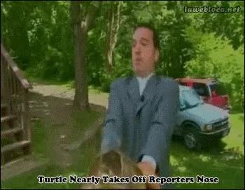 Enlace a No te fíes de las tortugas, no sabes cuando atacarán
