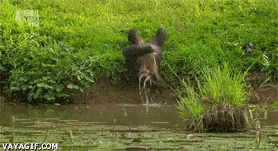 Enlace a Visto así, es imposible negar la teoría que el hombre viene del mono