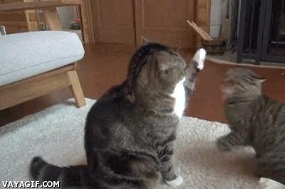Enlace a ¿Me estás levantando la pata? ¡A mí no me levantes la pata que te reviento!