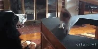 Enlace a La torpeza de los cachorros de gatito todavía los hace más monos
