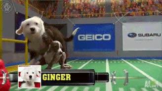 Enlace a Esto es mejor que la Super Bowl, impresionante placaje de Ginger