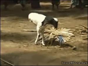 Enlace a Los animales no entienden de superación, simplemente viven con las circunstancias que le tocan