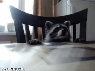 Enlace a Así desayunan los mapaches