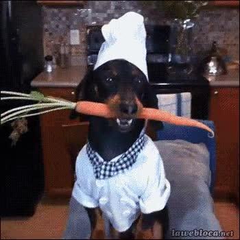 Enlace a El chef de las zanahorias