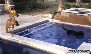 Enlace a Aunque seas un perro, ¡no corras por el borde de la piscina!