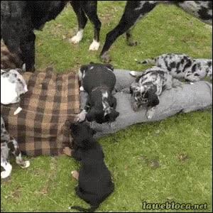 Enlace a Ponte comida de perros debajo de la ropa y prepárate a ser devorado